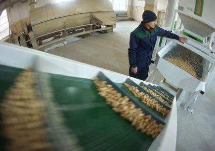 Оптимизируем процесс производства пиломатериалов в Екатеринбурге