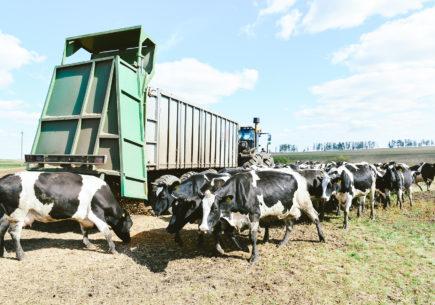 Оптимизация процесса доения на производстве молока
